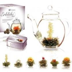 Coffret théière et 6 fleurs de thé noir
